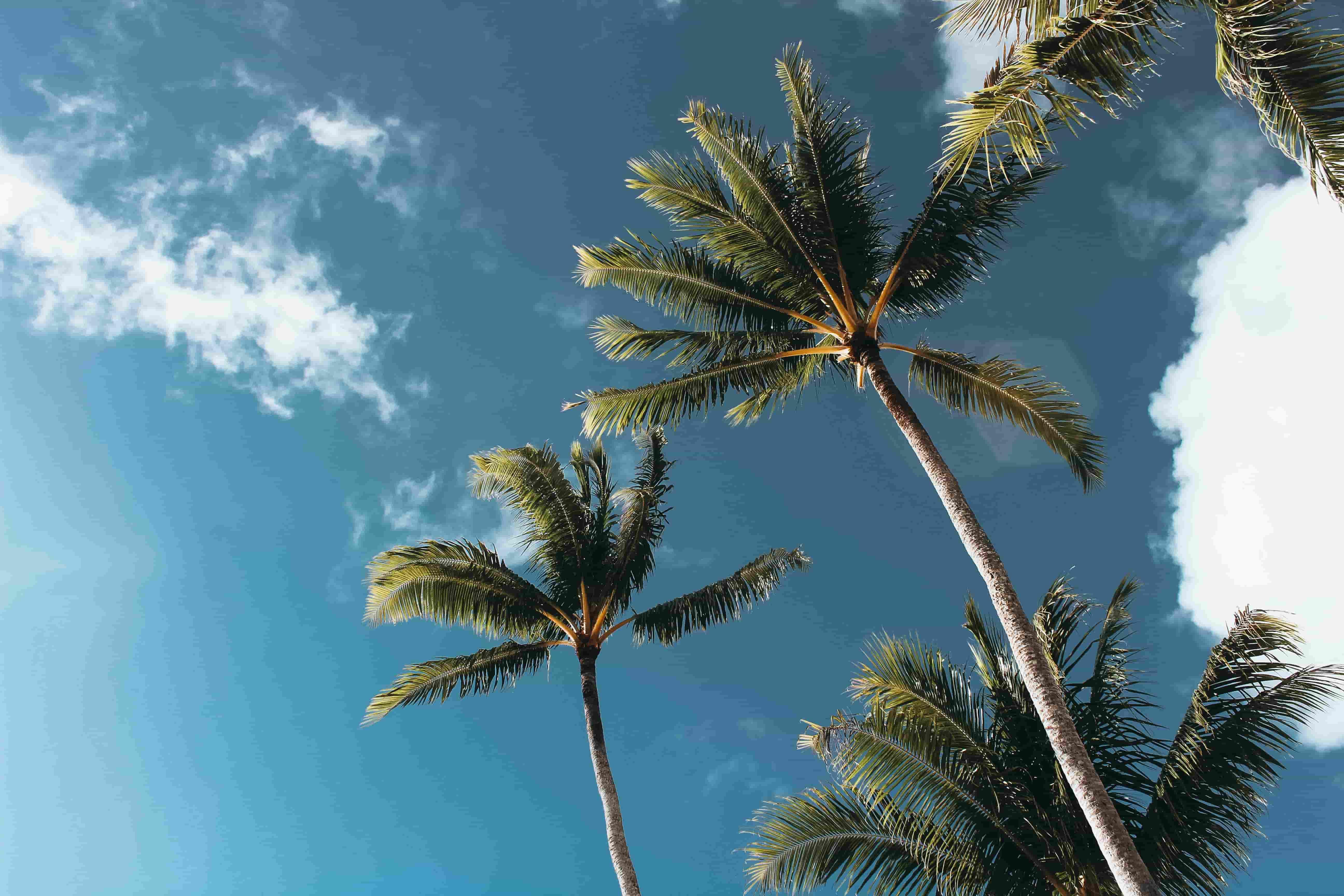 ケツメイシ ヤシの木のように 歌詞とメロディが最高な夏曲!